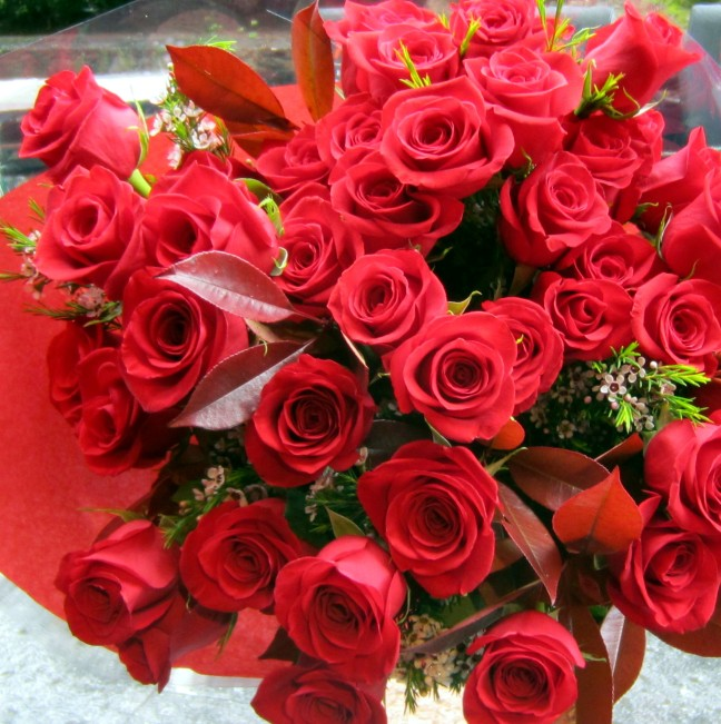 44 rosas rojas