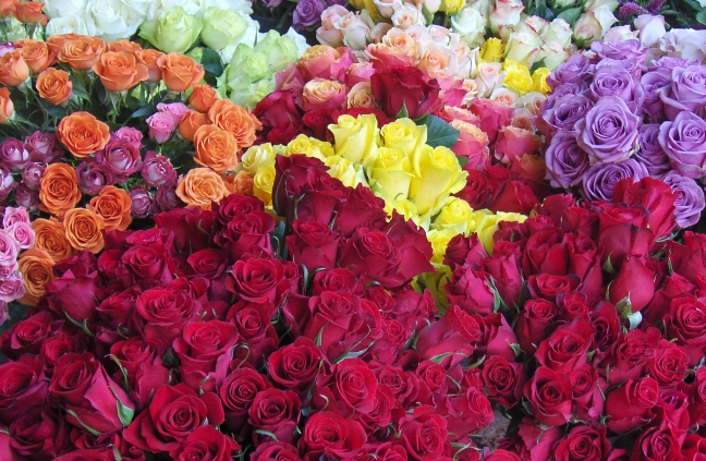 Rosas 002