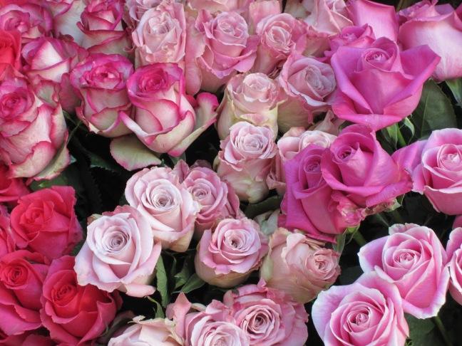 Rosas rosas 002