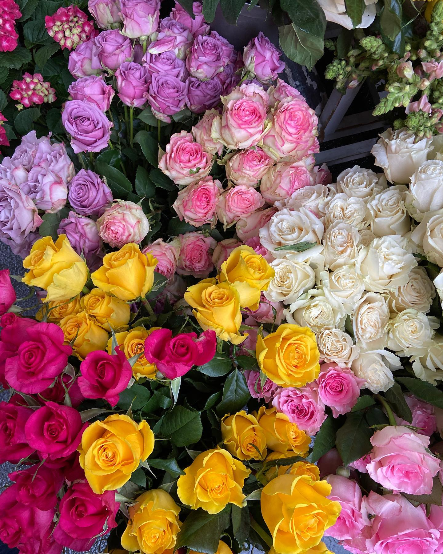 Flores para volver a la rutina